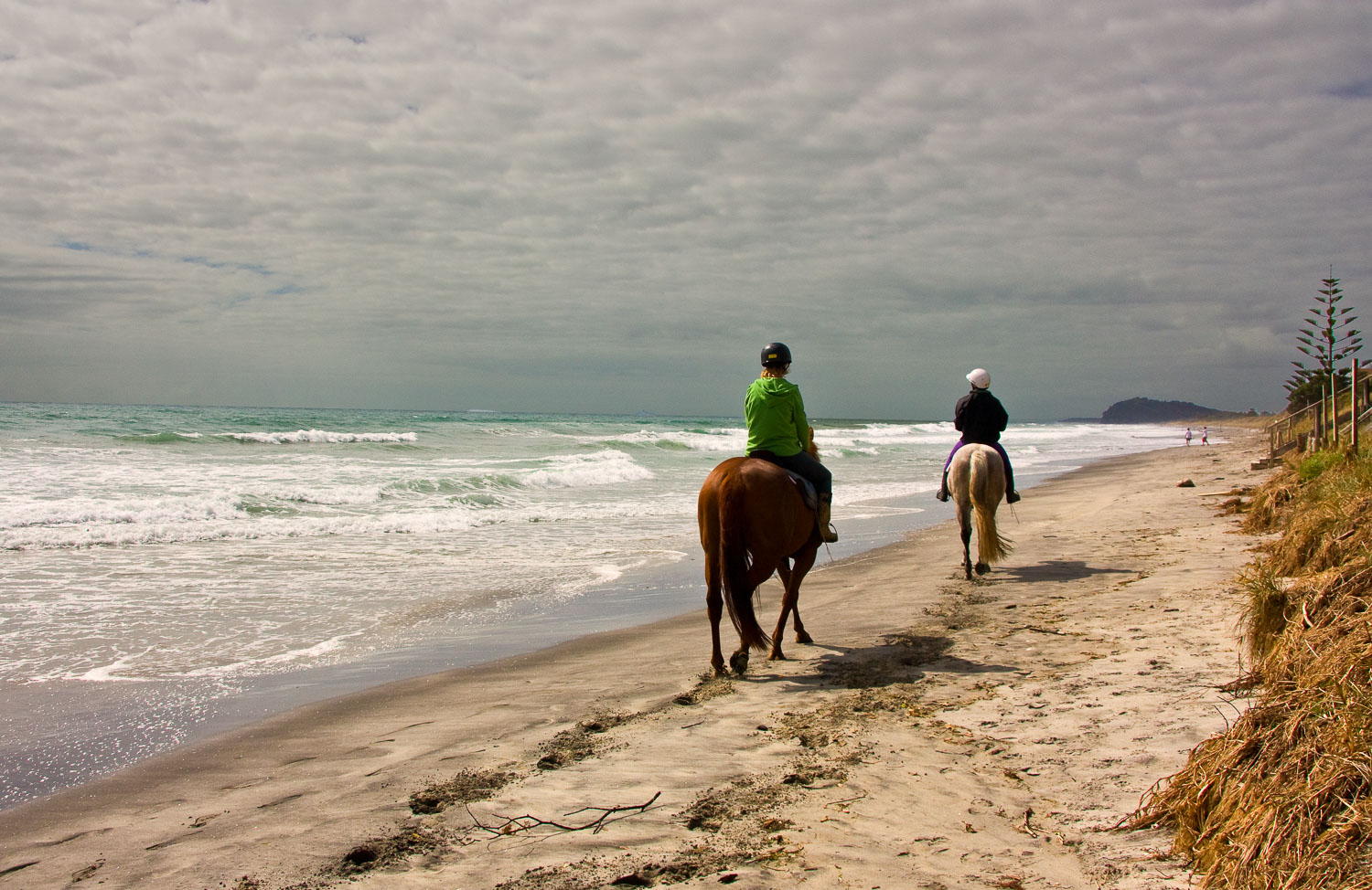 Horses-on-Beach-South-Pacific-Ocean-6288.jpg