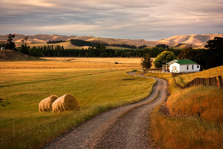 NZ-Farm-Hastings-6572_.jpg