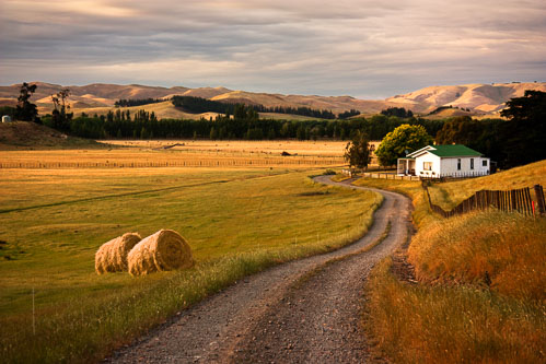 NZ-Farm-Hastings-6572_.jpg