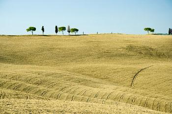 H-Italy-Hillside-Cypress-trees-3596_.jpg